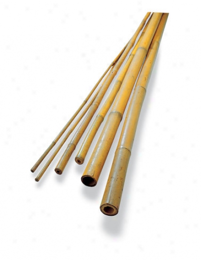 #4 Bamboo Poies, Regular Of 25