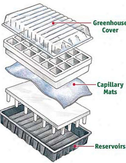 Aps-24 Planting Cells