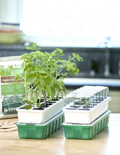 Beginner Seedstarter Kit