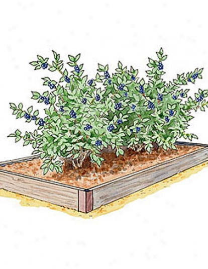 Blueberry Bed
