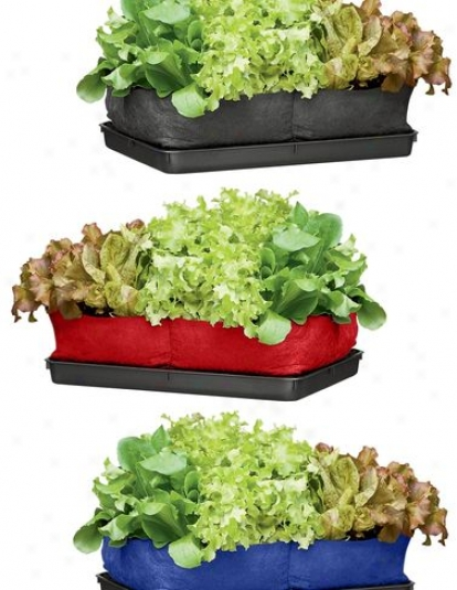 Colorful Salad Grow Bag