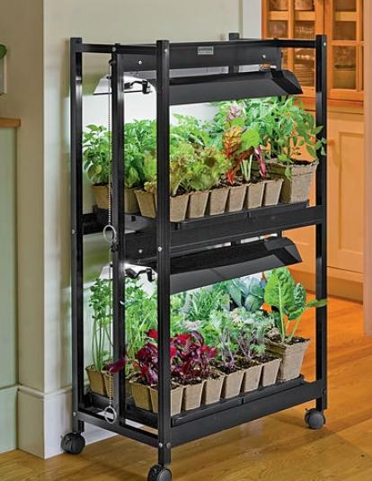 Compact 2-tier Garden Starter Kit