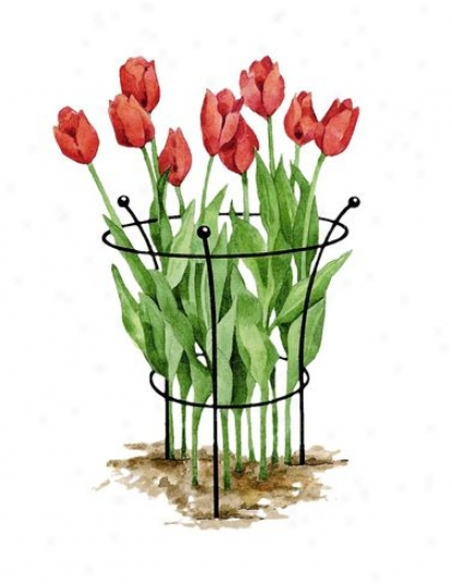 Essex Tulip Suppots, Set Of 2