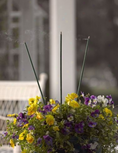 Garden Incense Sticks, Set Of 12