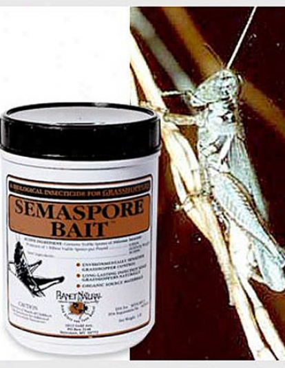 Grasshopper Ascendency, 1 Lb.