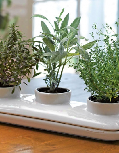 Herb Pot Trio