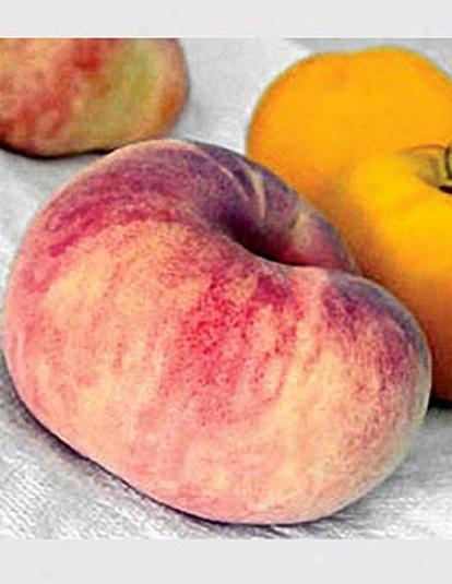 Saturn Peach