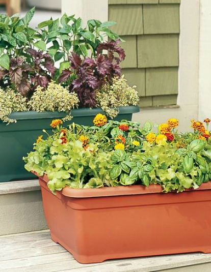 Self-watering Patio Planter, Terra Cottaa