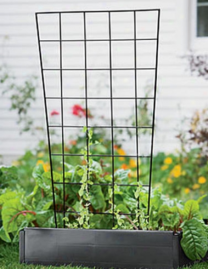 Vegetable Trellis, 56""