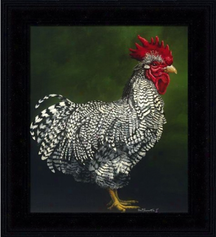 'plymouth Rock Cockerel' Print