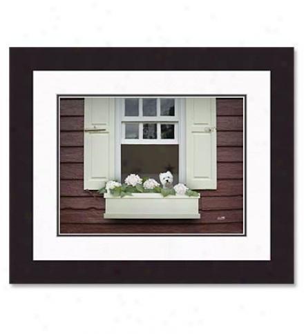 'posy'framed Print