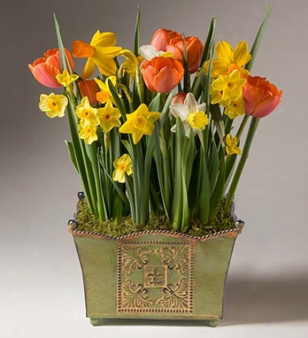 Citrus Colors Bulb Garden In A Reusable Basket