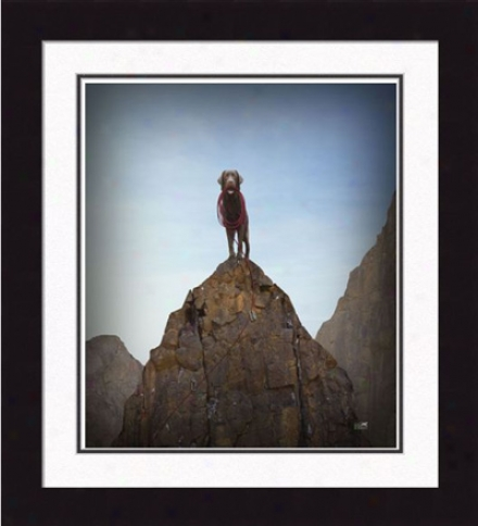 Gallery Quality 'rocky, The King Of The Hill' Framed Print By Ron Schmidt