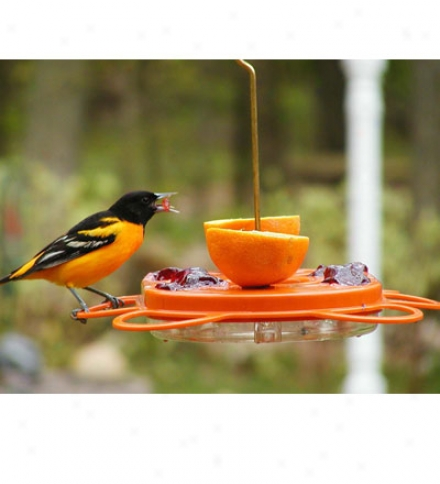 Hummingbird & Oriole Nectar, Case Of 12