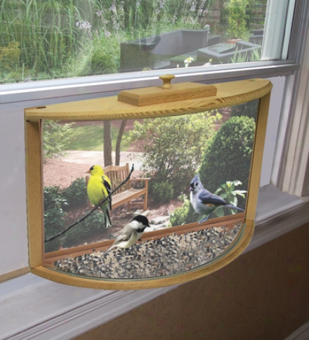 In-house Window Bird Feeder