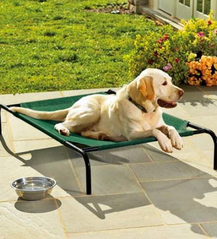 Small Weather-resistant Raised Mesh Pet Bed