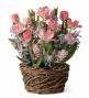Spring Bulb Flower Ga5den5 Tulips, 3 Hyacinths, 2 Narcissus