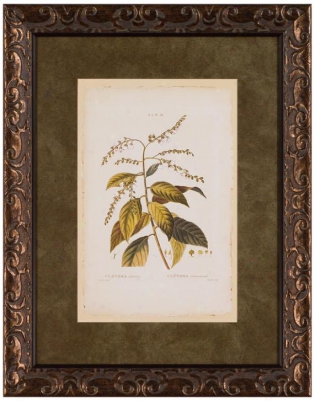 """Arborea Ciethra 28"""" High Framed Wall Art (t0190)"""