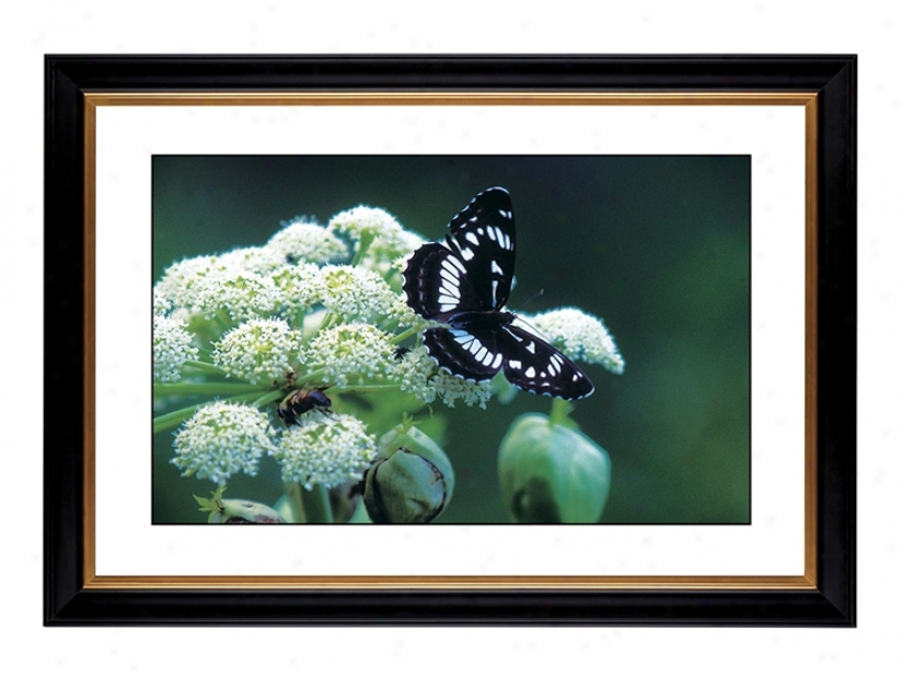 "Giclee 41 3/8"" Spacious Butterfly Flower Wall Art (54088-80384)"