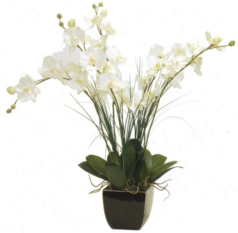 Maui Clouds White Orchids (j7434)