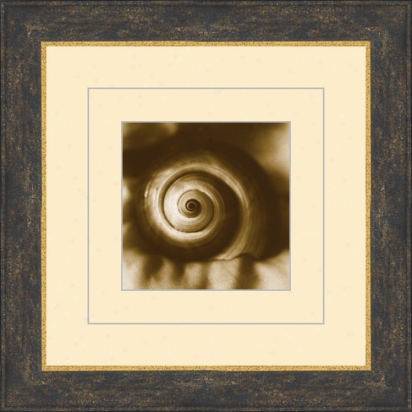 "Seashells In Sepia C 15 1/2"" Square Wall Art (05476)"