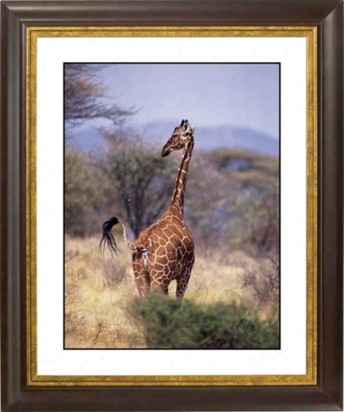 "Serengeti Giraffe Gold Bronze Frame Giclee 20"" High Wall Art (f0715-18019)"