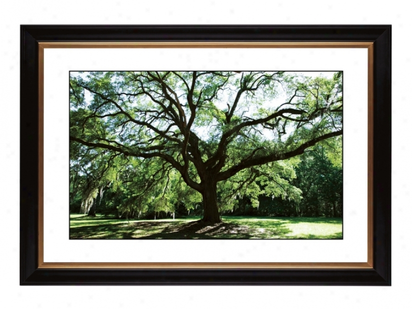 "Spreading Tree Giclee 41 3/8"" Wide Wall Art (57760-80384)"