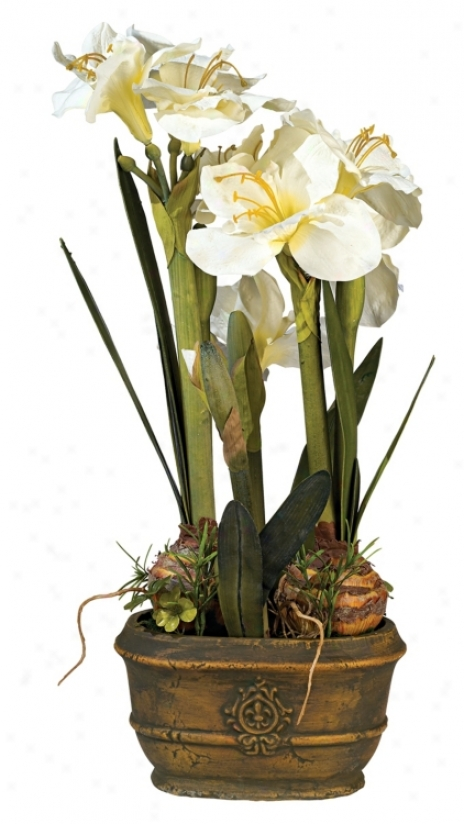 White Triple Amaryllis Flower Arrangement (30150)