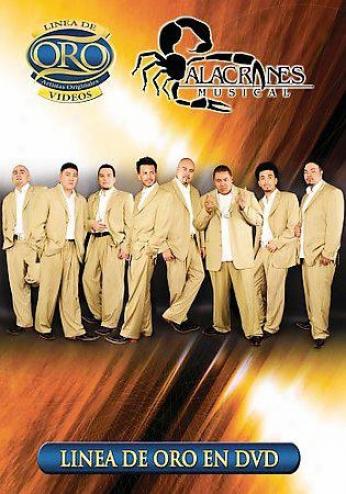 Alacranes Musical - Linea De Oro En Dvd
