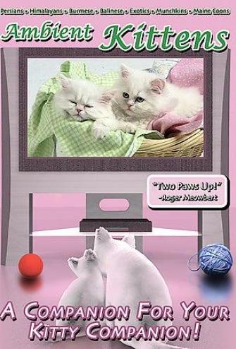Amboent Kittens