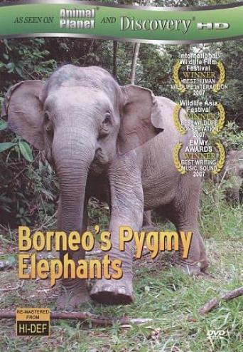 Borneo's Pygmy Elphants