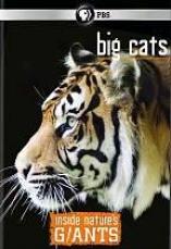 Inside Natre's Giants: Big Cats