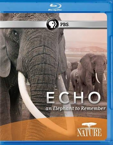Nature: Echo - An Elephant To Remember