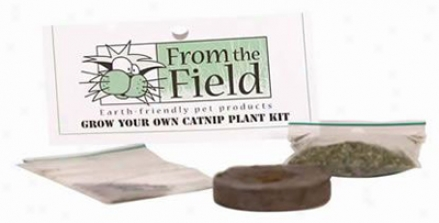 Grow Your Own Organic Catnip Plant Kit