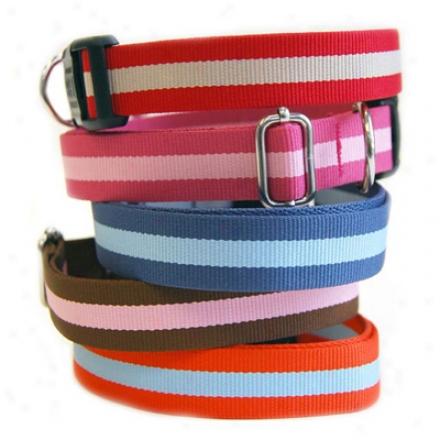 """Harry Barker Eton Collar 3/4"""" Lg Light Pink/darkbl (ss)"""