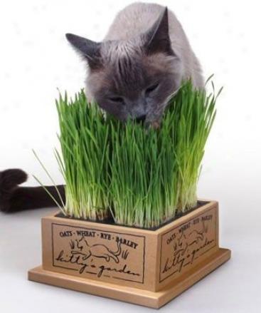 Smartcat Kitty's Garden Refill Kit