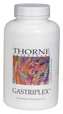 Thorne Research Gastriplex Dog & Cat Supplement