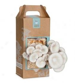Grow-your-0wn Mushroom Garden Kit