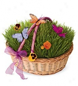 Living Grass Set With Willow Wicker Basket