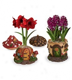 Upstart Fairy House Planter With Amaryllis Bulb