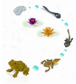 Safariology Life Cycle Set