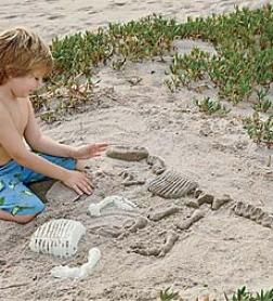 Set Of 10 Sandosaurs Dino Fossil Molds