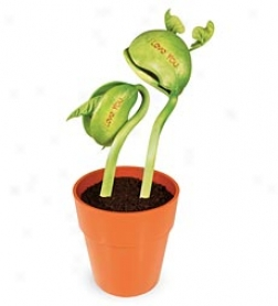 Set Of 2, I Love You Bean Plant Kit