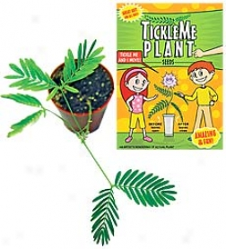 Tickle Me Plant Set Of 6 With Greenhouse